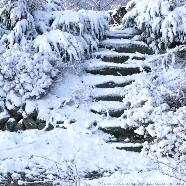 Snowy-Stairs-ⓒ-michaela-medina-thegardenerseden