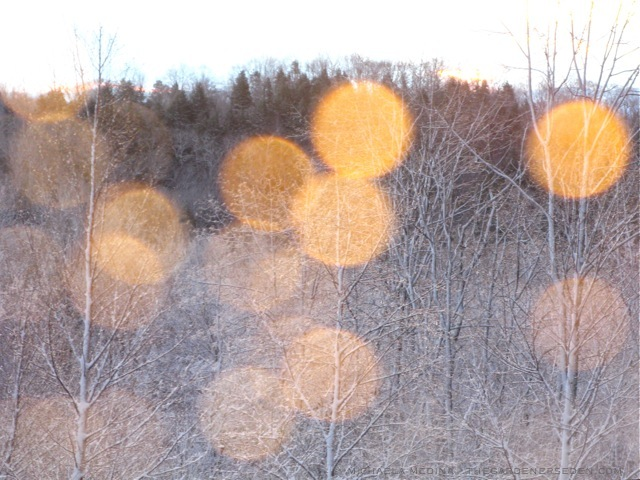 Sun-Spots-and-Snow-Drops-ⓒ-michaela-medina-thegardenerseden