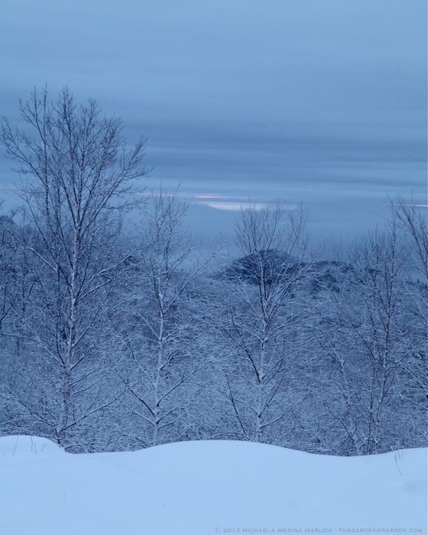 Southern Hills in Snow ⓒ 2013 Michaela Medina  - thegardenerseden.com