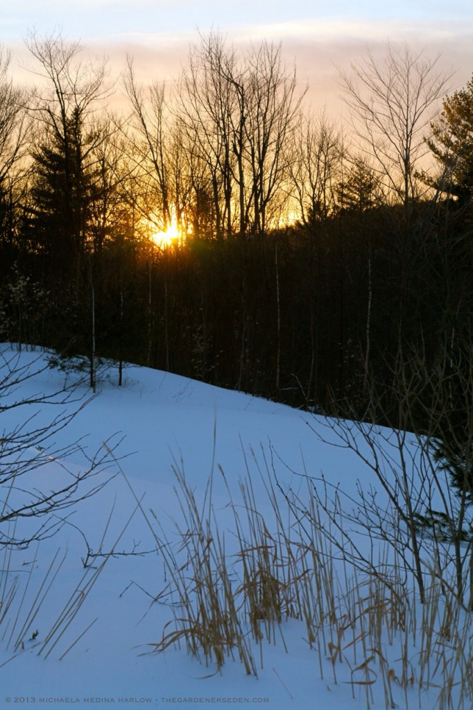 March Sunset in the Garden After the Storm ⓒ 2013 michaela medina - thegardenerseden.com