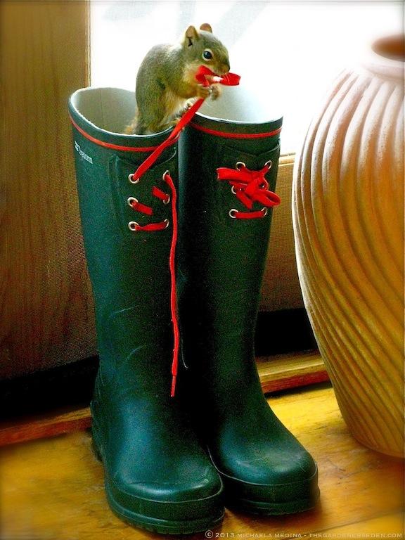 Ozzy in Garden Boots ⓒ 2011 Michaela Medina Harlow - thegardenerseden