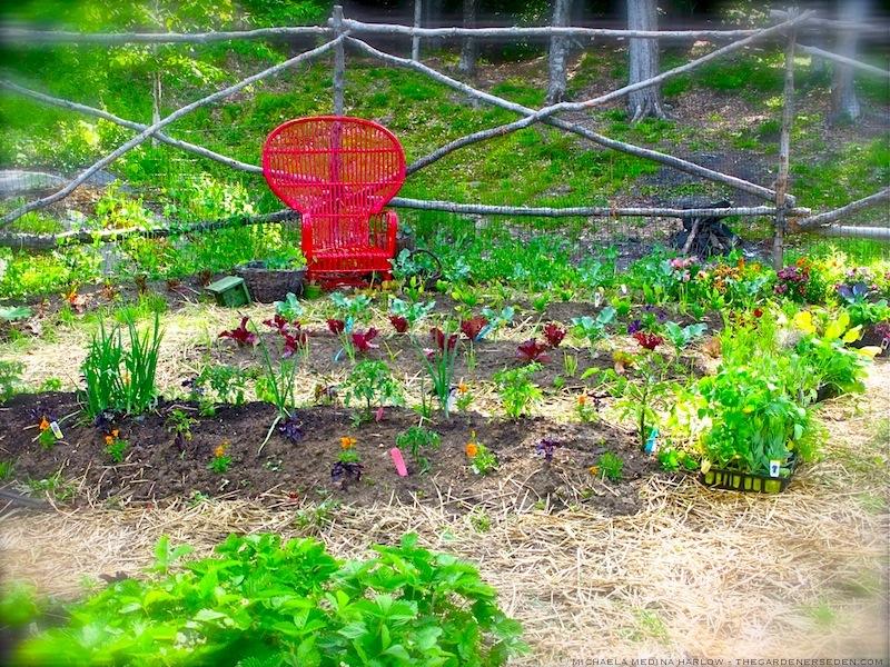 Potager_Planting_michaela_medina_harlow_thegardenerseden
