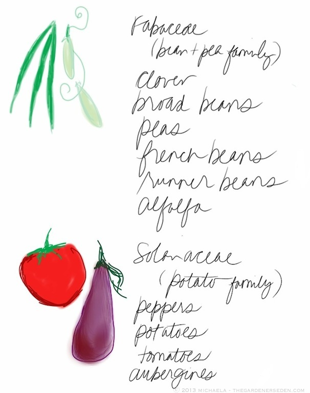 plant_families_drawing_list_3_michaela_medina_harlow_thegardenerseden.com