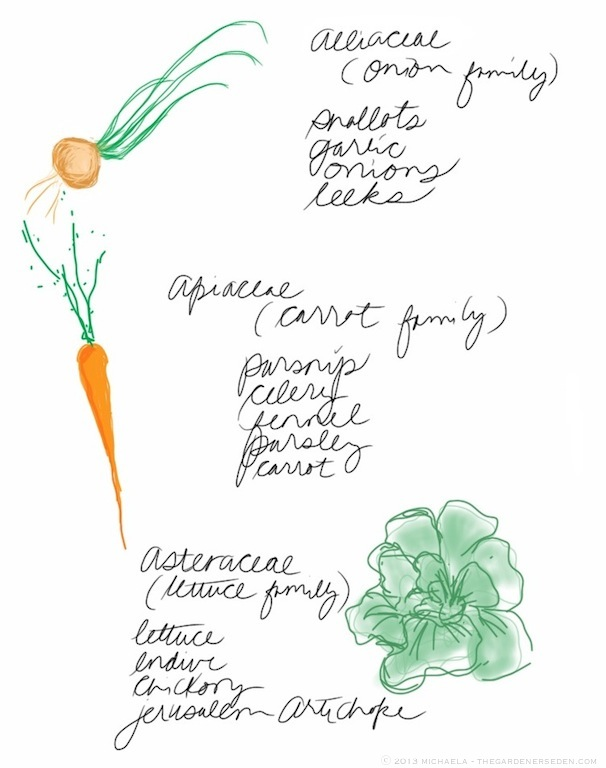 plant_family_drawing_list_michaela_medina_harlow_thegardenerseden.com