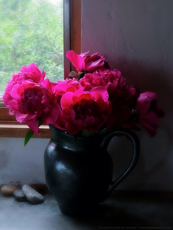 Paeonia lactiflora 'Kansas' in Aletha Soule Vase - michaela medina harlow - thegardenerseden.com