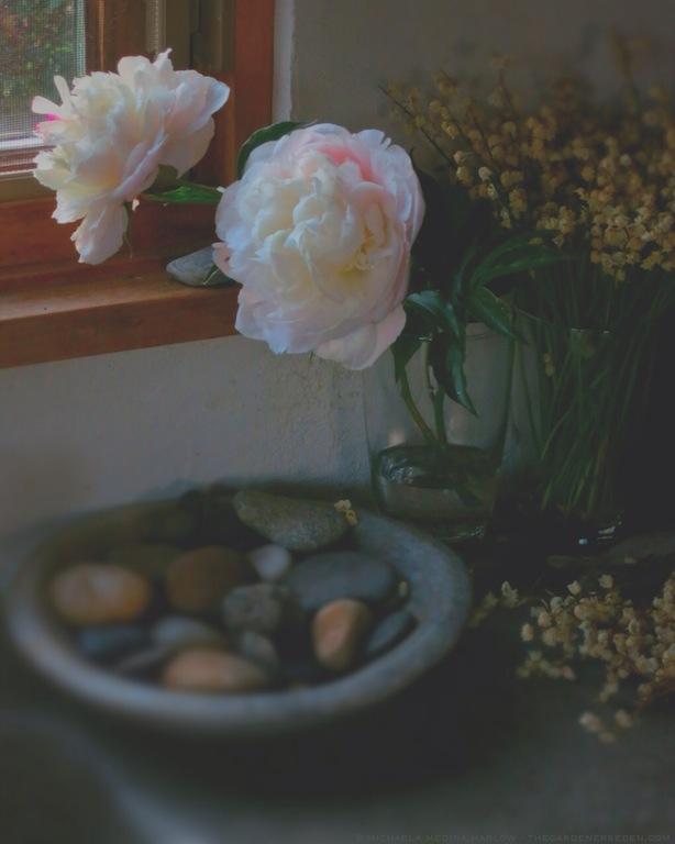Paeonia_lactiflora_'Raspberry_Sundae'_michaela_medina_harlow_thegardenerseden.com