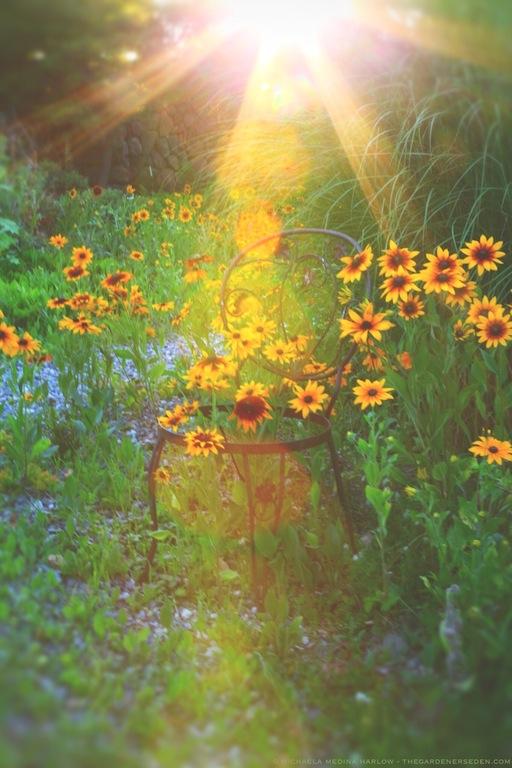 summer seat in the wildflower walk - michaela medina harlow - thegardenerseden.com
