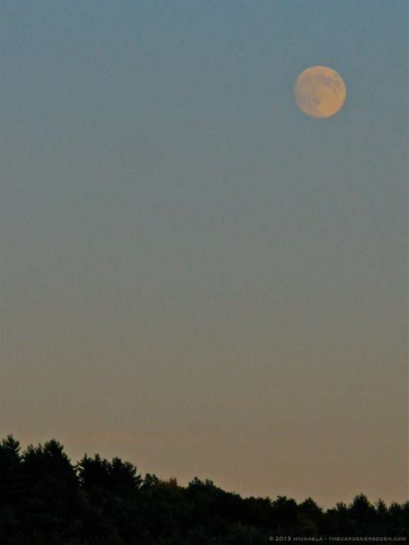 full moonrise - michaela medina harlow - thegardenerseden.com