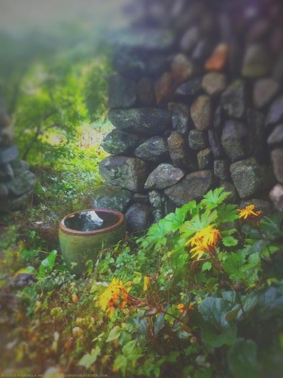 Ligularia dentata 'Britt-Marie Crawford' in the Secret Garden. - michaela medina  harlow - thegardenerseden.com