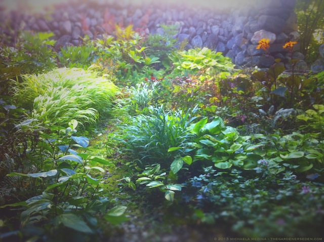 Secret Garden in September - michaela medina harlow - thegardenerseden.com