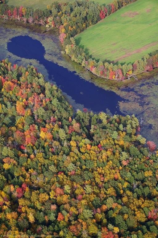 Keyhole Swamp, Vernon, Vermont - Michaela Medina Harlow - thegardenerseden.com