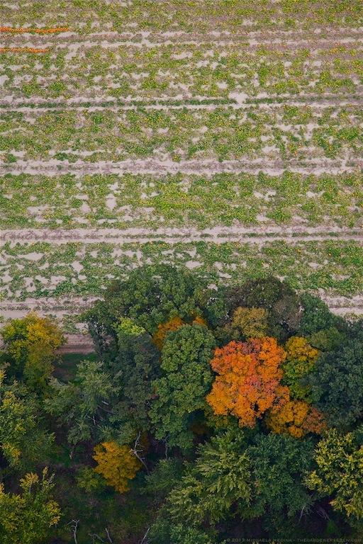Pumpkin Harvest - michaela medina harlow - thegardenerseden.com