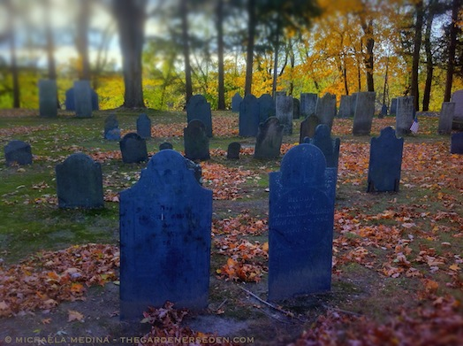 Riverside Cemetery at Sunset - michaela medina harlow - thegardenerseden.com