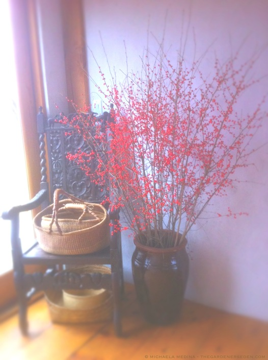 Winterberry in the Entry (Ilex verticillata) - copyright michaela medina harlow - thegardenerseden.com