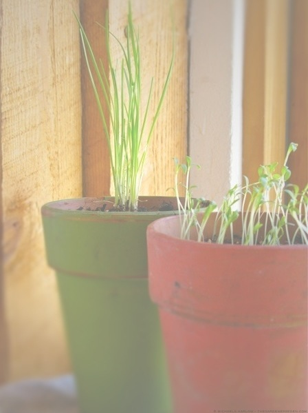 New_Beginnings_on_the_Windowsill_michaela_medina_harlow_thegardenerseden.com