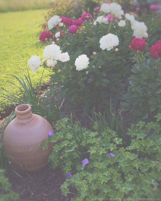 Madrigan_Garden_Stephen_Procter_Vase_Photo_Copyright_Michaela_Medina_Harlow_thegardenerseden.com