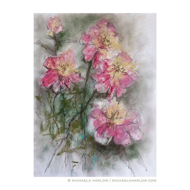 Botanical Drawing VI, Pink Peonies, Copyright Michaela Harlow 2015, Graphite and Chalk Pastel on 14 x 10.5 Paper