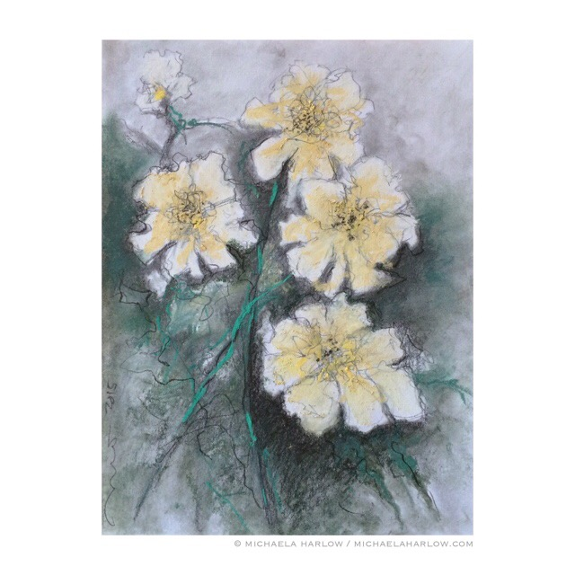 Peonies, Early White, copyright Michaela Harlow 2015, Graphite, Charcoal and Pastel on 14 x 10.5 Paper