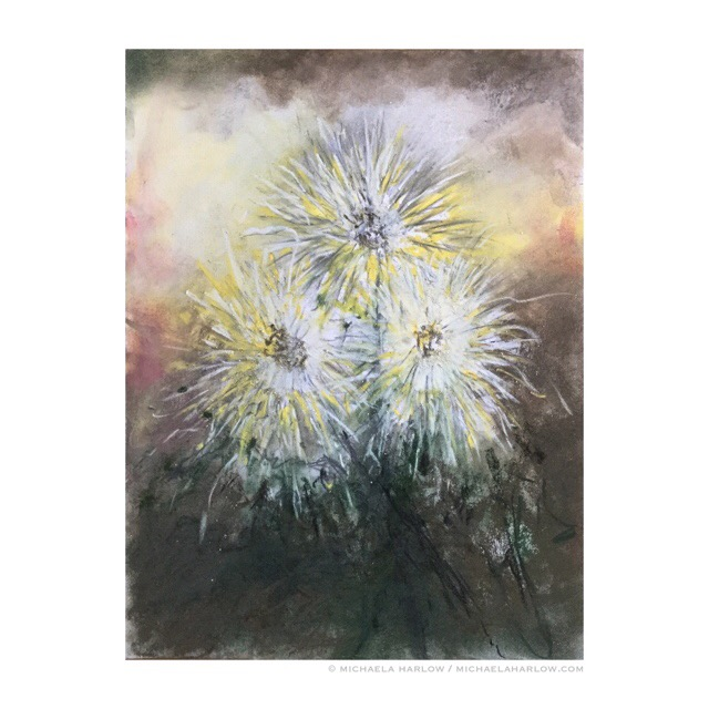 Spider Dahlias, copyright Michaela Harlow 2015, Charcoal, Graphite and Pastel on 14 x 10.5 Paper