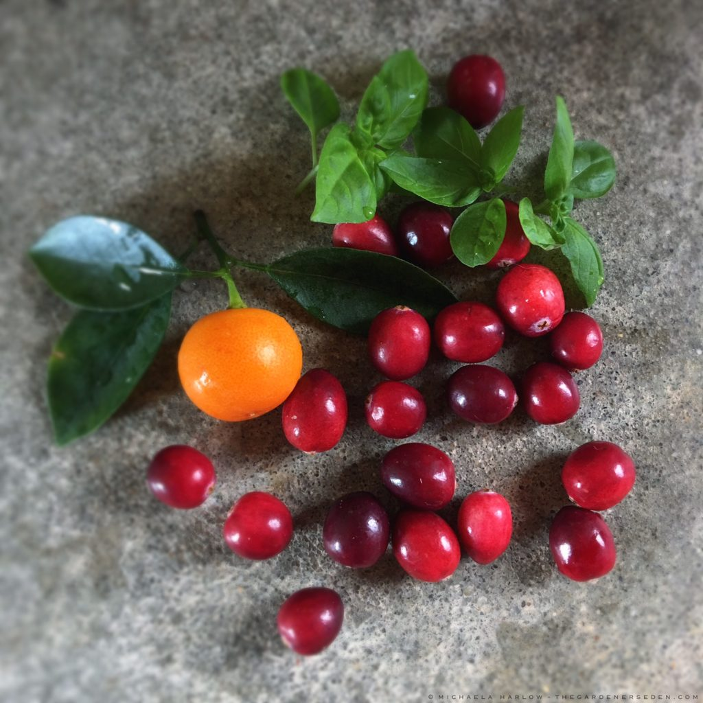 donu0027t you just love cranberries they glow like ruby beads and theyu0027re so willing to wait around in the fridge as a lifelong new englander i always make