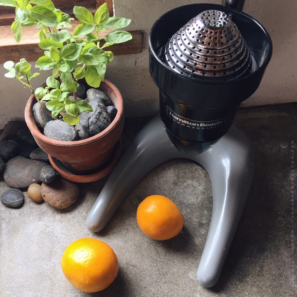 Hamilton Beech Commercial Citrus Juicer. Less Than Perfect Lemons U003d  Perfectly Fine Juice For A Perfectly Delicious Tart