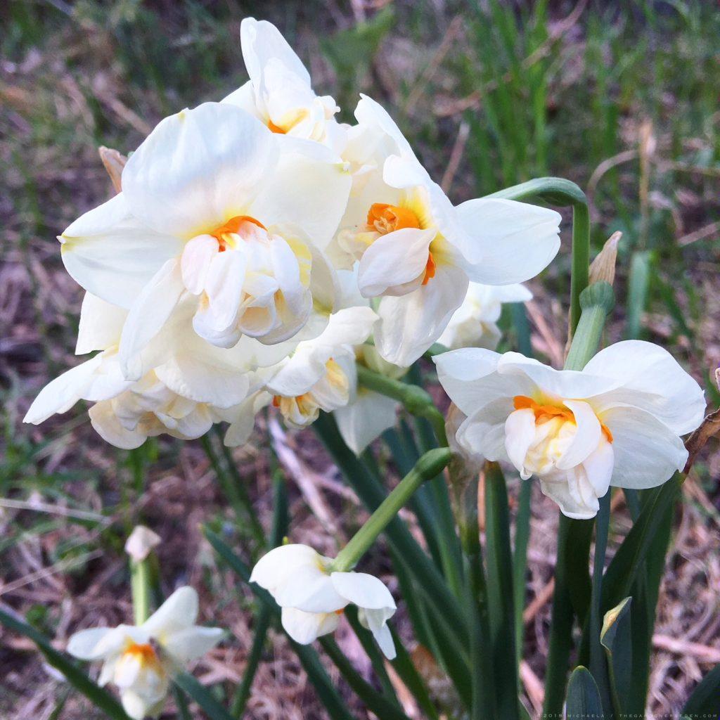 Fragrance The Gardener\'s Eden