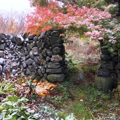 Trees For Fall Foliage The Gardeners Eden