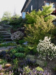 early-spring-walkway