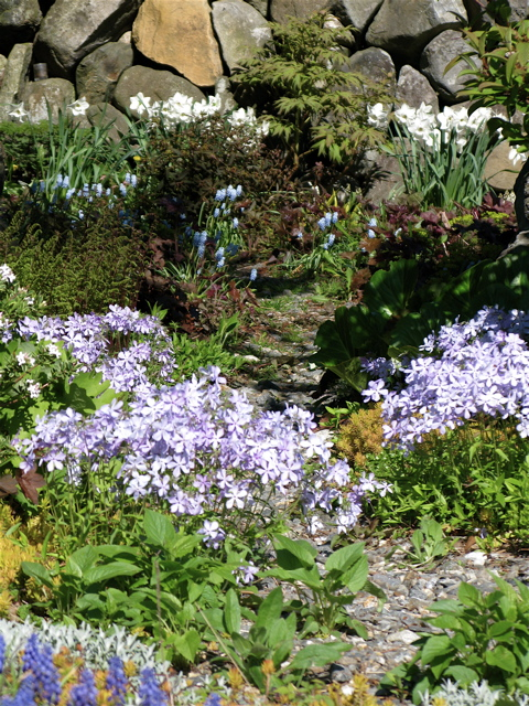 Woodlland-phlox-muscari-narcissus ⓒ Michaela at TGE