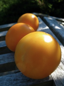 orange blossom tomatoes