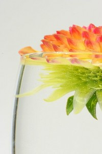 floating dahlia copyright 2009 tim geiss