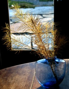 Amsonia in Vase