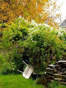 Holzapfel studio garden