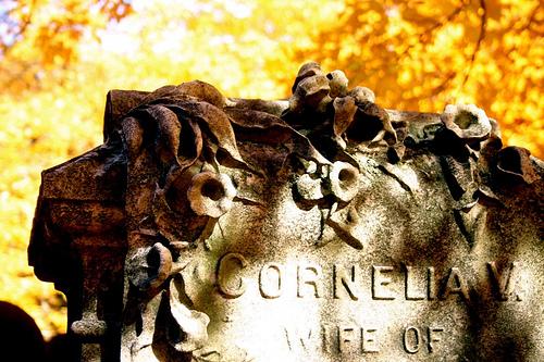 Liz Forest Hills 'Cornelia'