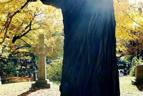 Liz Forest Hills 'Gleam'