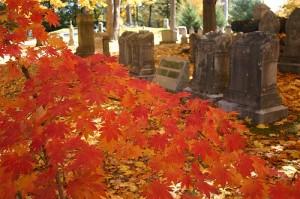Liz Forest Hills 'Red Death'