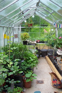 Virigina Wyoming greenhouse 2