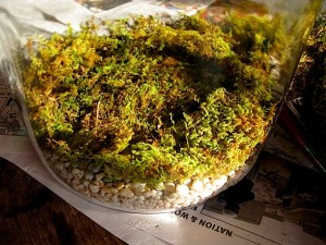 terrariums stage 2 sphagnum sheet moss