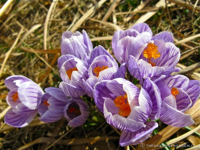 24 X 36 24 by 36-Inch Kess InHouse Ann Barnes Bluebell Forest Purple Flowers Memory Foam Bath Mat