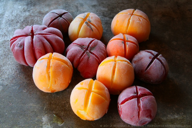 Frozen Heirloom Tomatoes ⓒ michaela medina - thegardenerseden.com