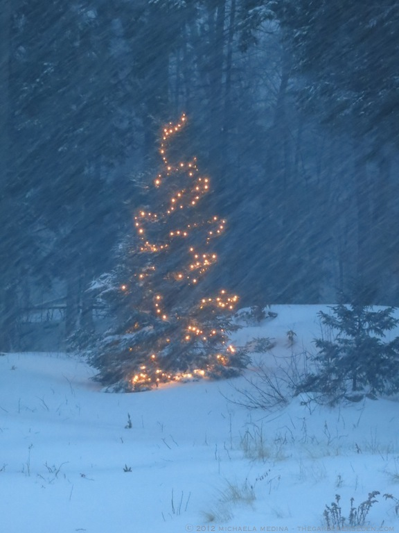 Christmas Tree in Snow ⓒ 2012 michaela medina - thegardenerseden.com