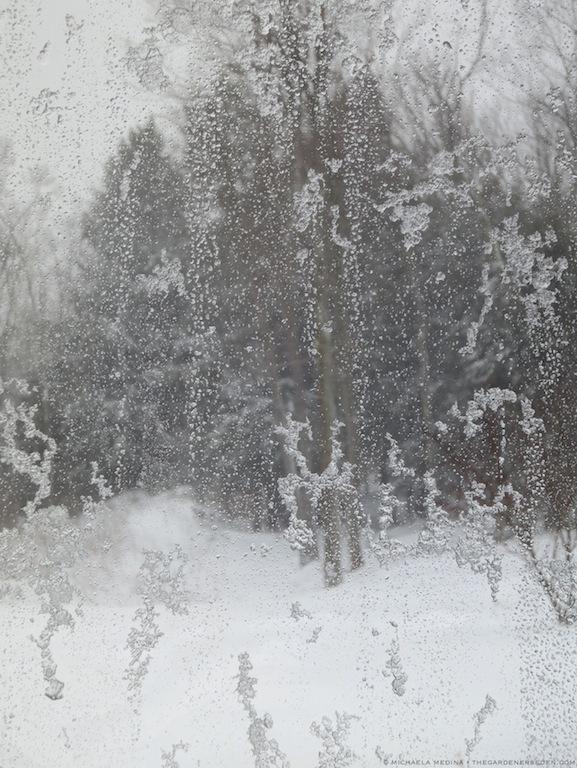 Snow and Sleet Blasted Window ⓒ 2012 michaela medina - thegardenerseden.com