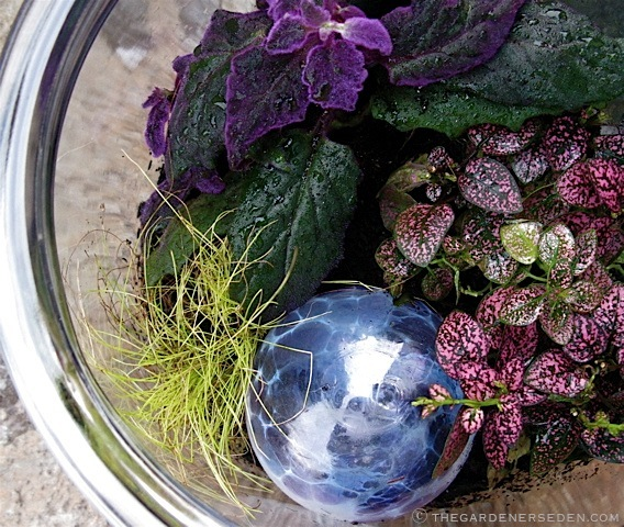 Terrarium-with-blown-glass-ball-and-foliage-plants-ⓒ-Michaela-at-TGE