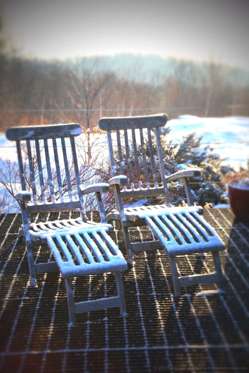 Winter Balcony ⓒ 2013 michaela medina - thegardenerseden.com