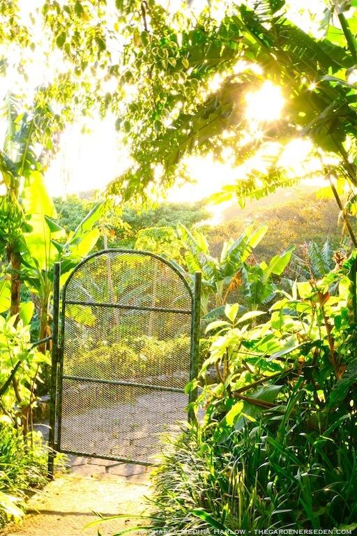 Gate at Finca Rosa Blanca Plantation, Costa Rica ⓒ 2013 Michaela Medina Harlow - thegardenerseden