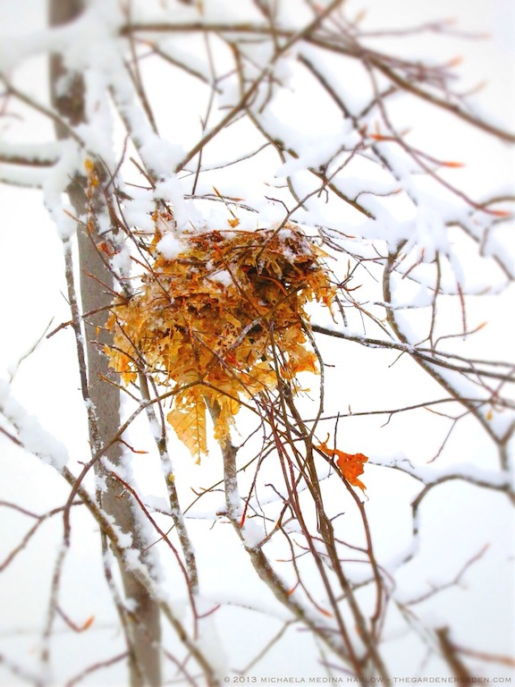 Snow-Covered Nest ⓒ 2013 michaela medina - thegardenerseden.com