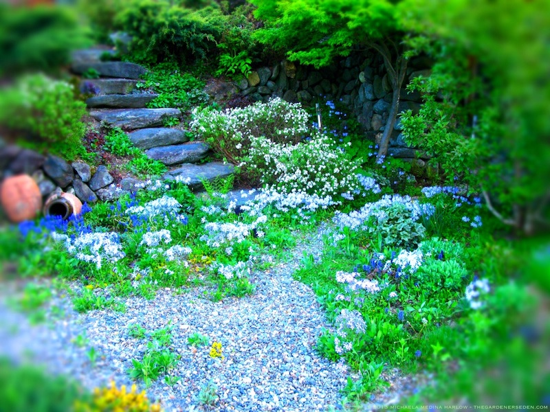 Spring Along the Secret Garden Path ⓒ Michaela Medina Harlow - thegardenerseden.com