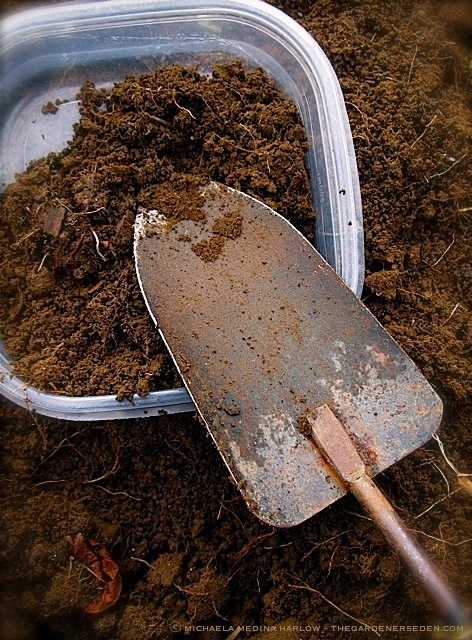 Soil-Sample-for-Testing_MichaelaMedinaHarlow_thegardenerseden