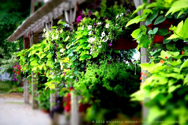 WalkerFarm_Dummerston_Vermont_2012_ michaela_medina_harlow_thegardenerseden.com