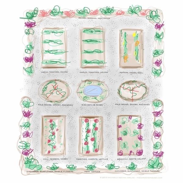 kitchen_garden_companion_planting_ plan_michaela_medina_harlow_thegardenerseden.com